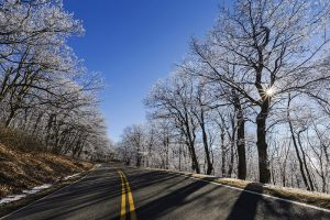Road with snow in the trees